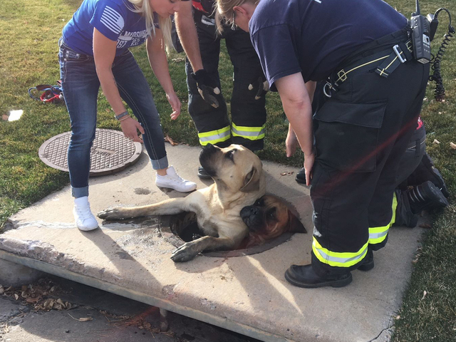 Firefighters, animal control officers rescue puppy from storm drain