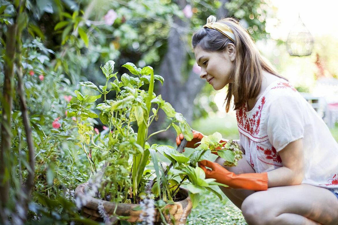 Organic Gardening Tips That Will Help You Grow Better Food